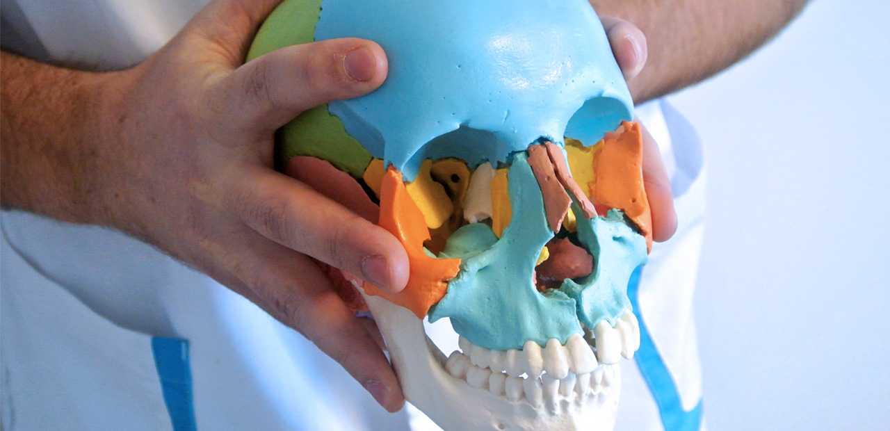 Ostéopathe manipulant un crâne de demonstration